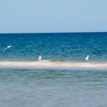 Пляжи в заказнике 2