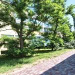 База отдыха Солнечная Соната в Кирилловке - территория