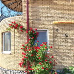 Территория базы отдыха «Азовское взморье»