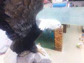 Гостевой дом «Орлиное гнездо»