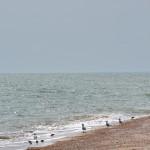 Пересыпь 2013 год, море и чайки