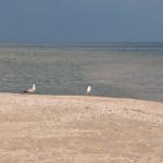 Пляж базы отдыха Ривьера